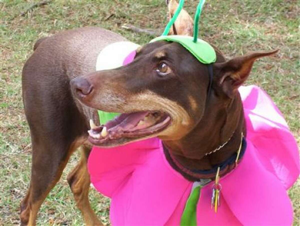 Andie won first place Doberfest 2009