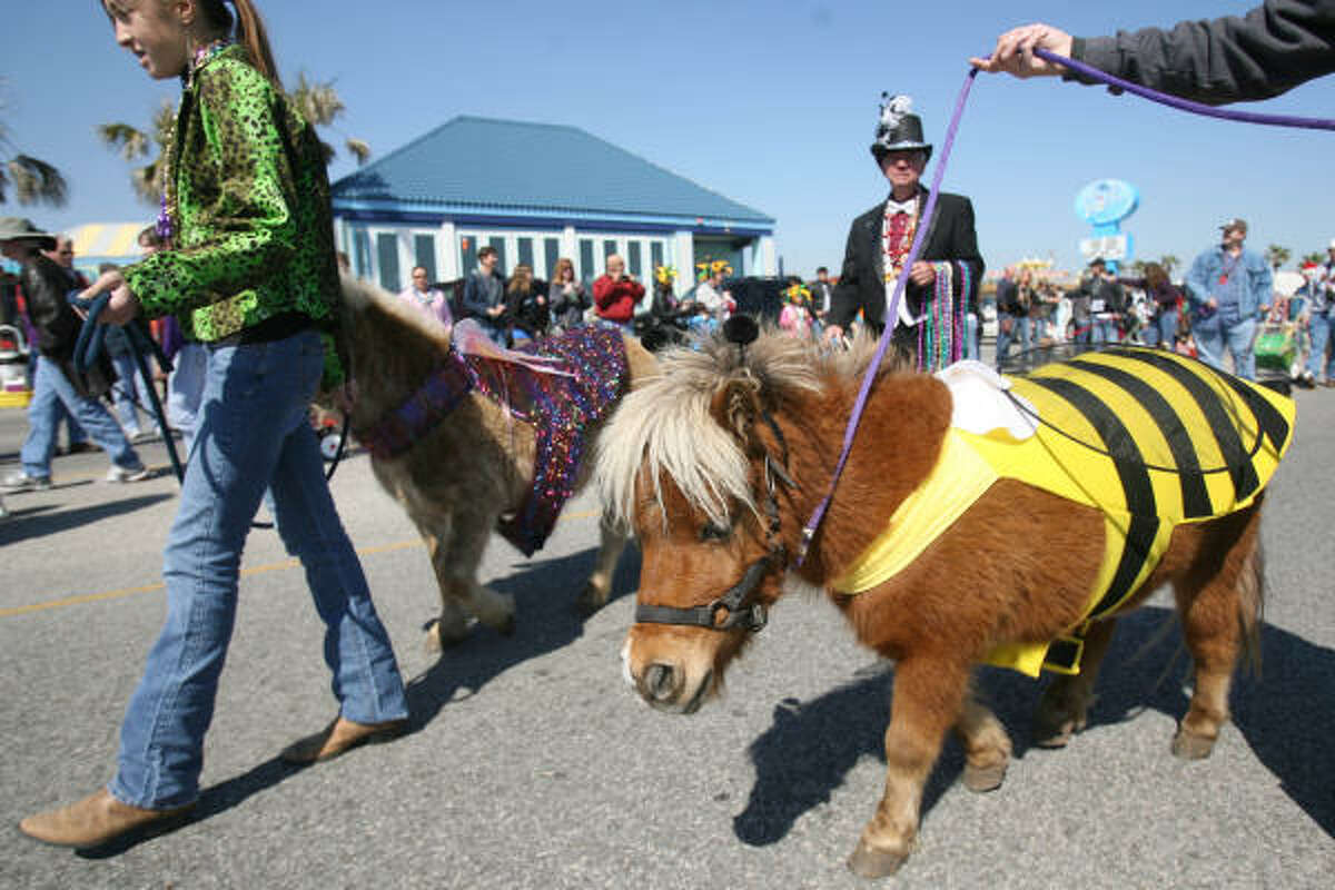 Miniature horses Napoleon and Gruffi were two of the 200 parade participants.