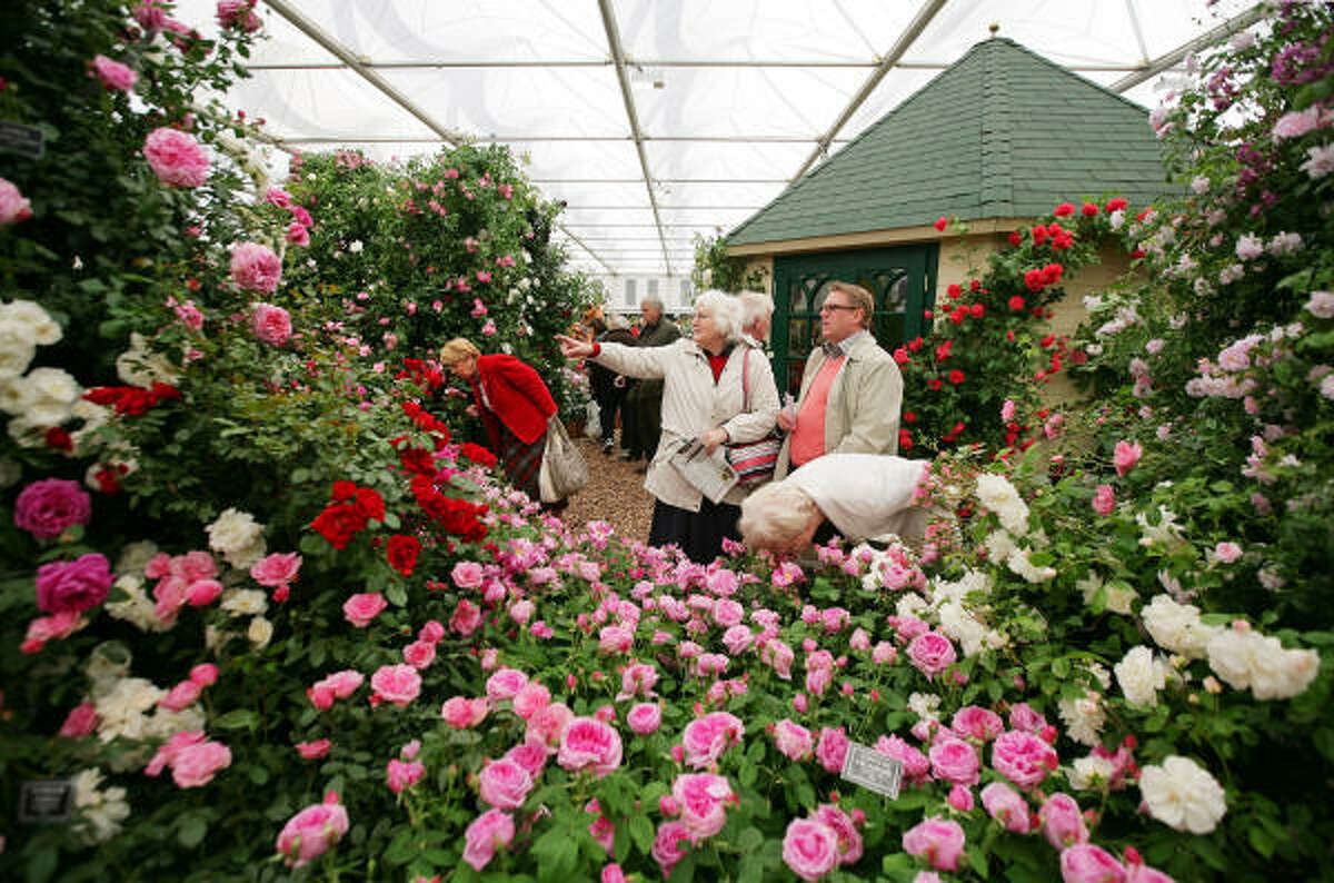 MAY 19: People smell roses at the 'Peter Beales Roses' stand at Chelsea Flower Show in London. The internationally renowned horticultural show runs from May 19-23, showcasing the latest gardening trends.