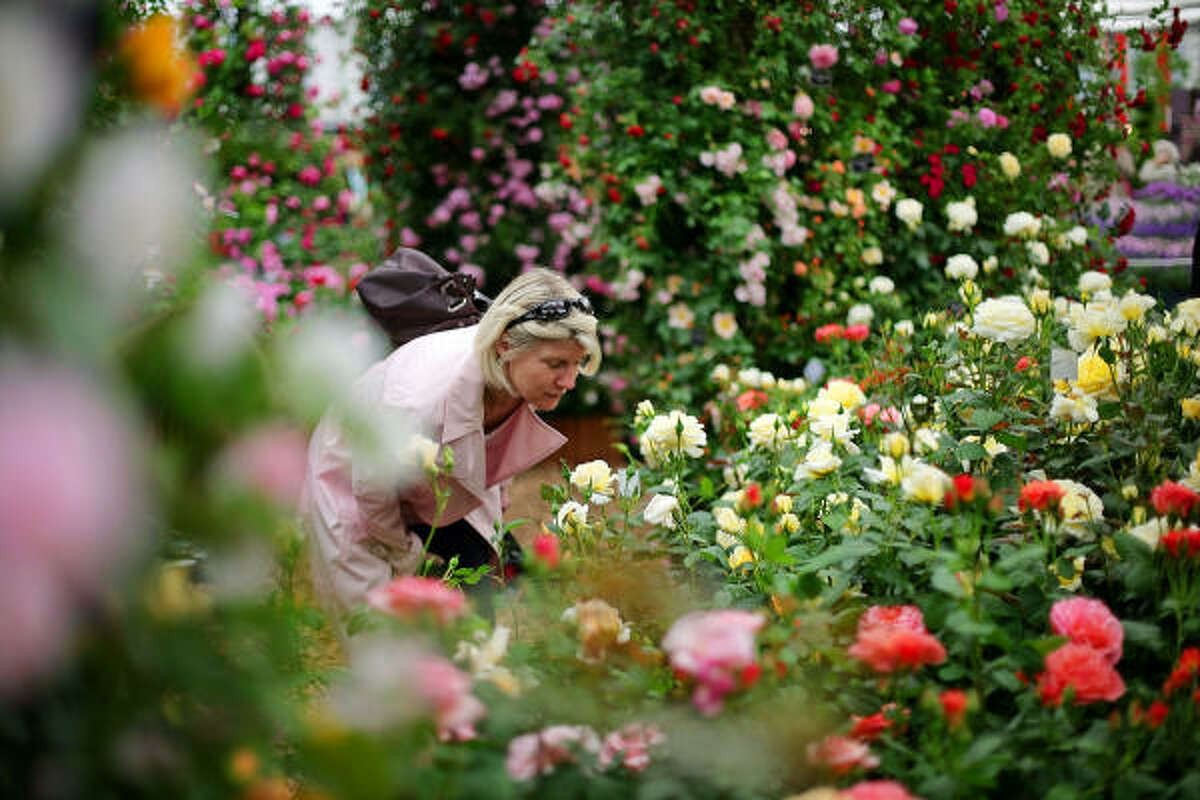 MAY 19: A woman smells a rose at the 'Peter Beales Roses' stand at Chelsea Flower Show.