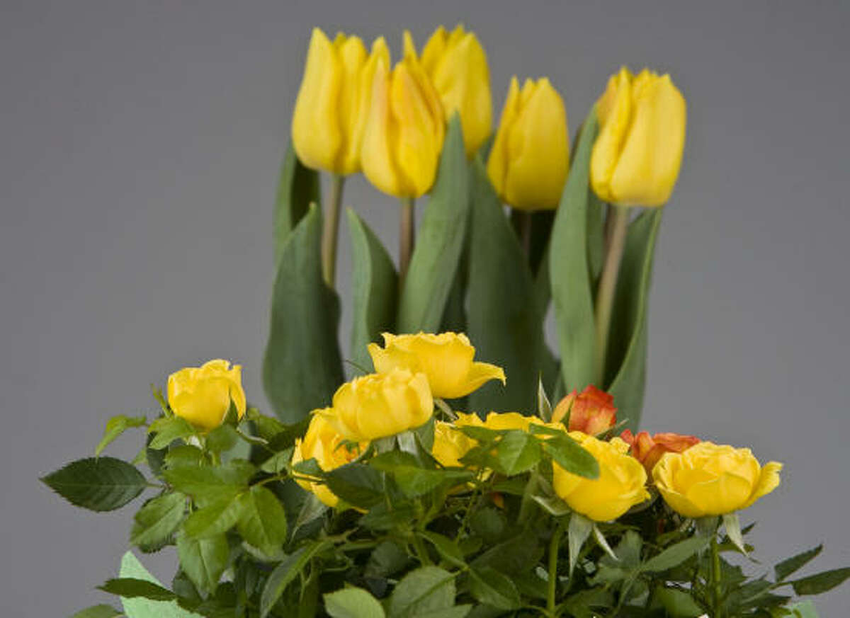 Debbie Baxter encourages clients to fill their home with flowering plants in one color. The repetition keeps it fresh.