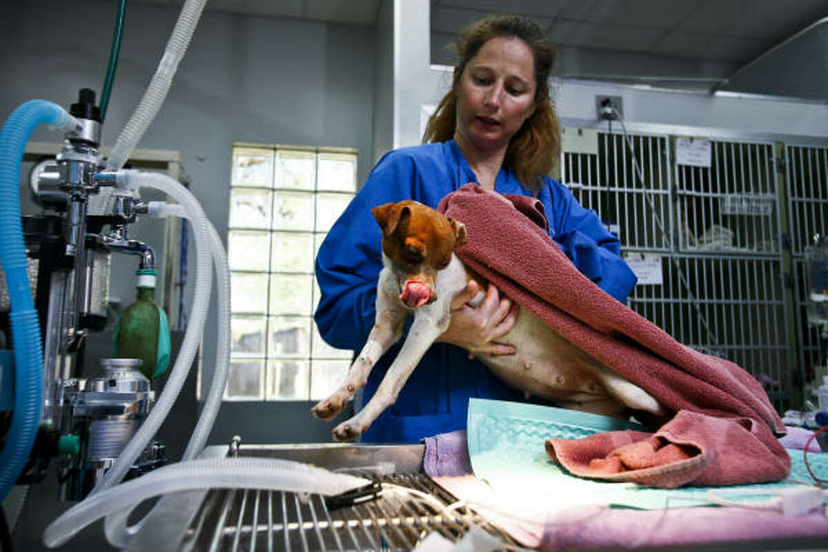 Sandra Shaner treats one of the puppies. All of them had medical evaluations earlier.