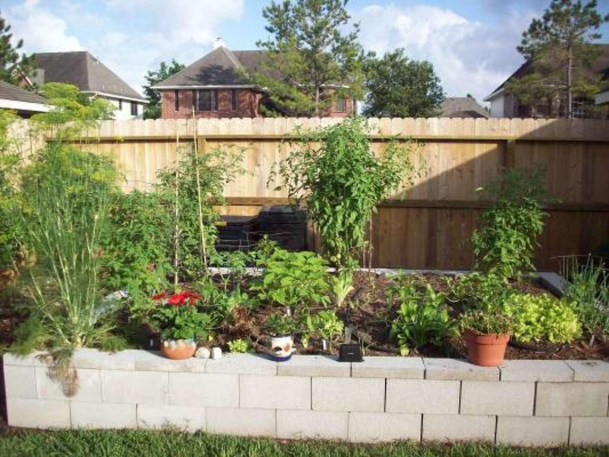 Backyard vegetable garden HoustonGrows bloggers: Bananaman   bearkat110   Maggierose   MyCornerofKaty   Plantwoman   rjudd   SirenadelaCompostela  ...