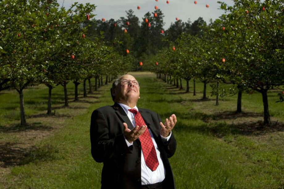 "Portrait of Mayhaw jelly award winner, Liberty County 75th Judicial District Judge C.T. ""Rusty"" Hight, surrounded by mayhaw fruit at a local orchard where he gathers the mayhaw's he uses in his jelly  in Votaw. Photo: Johnny Hanson, Chronicle"