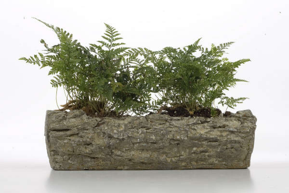 Faux bois plant holder $30, from Thompson+Hanson in 2007. Faux bois artist Donald Tucker   Submit your photos   Plant Database   HoustonGrows.com