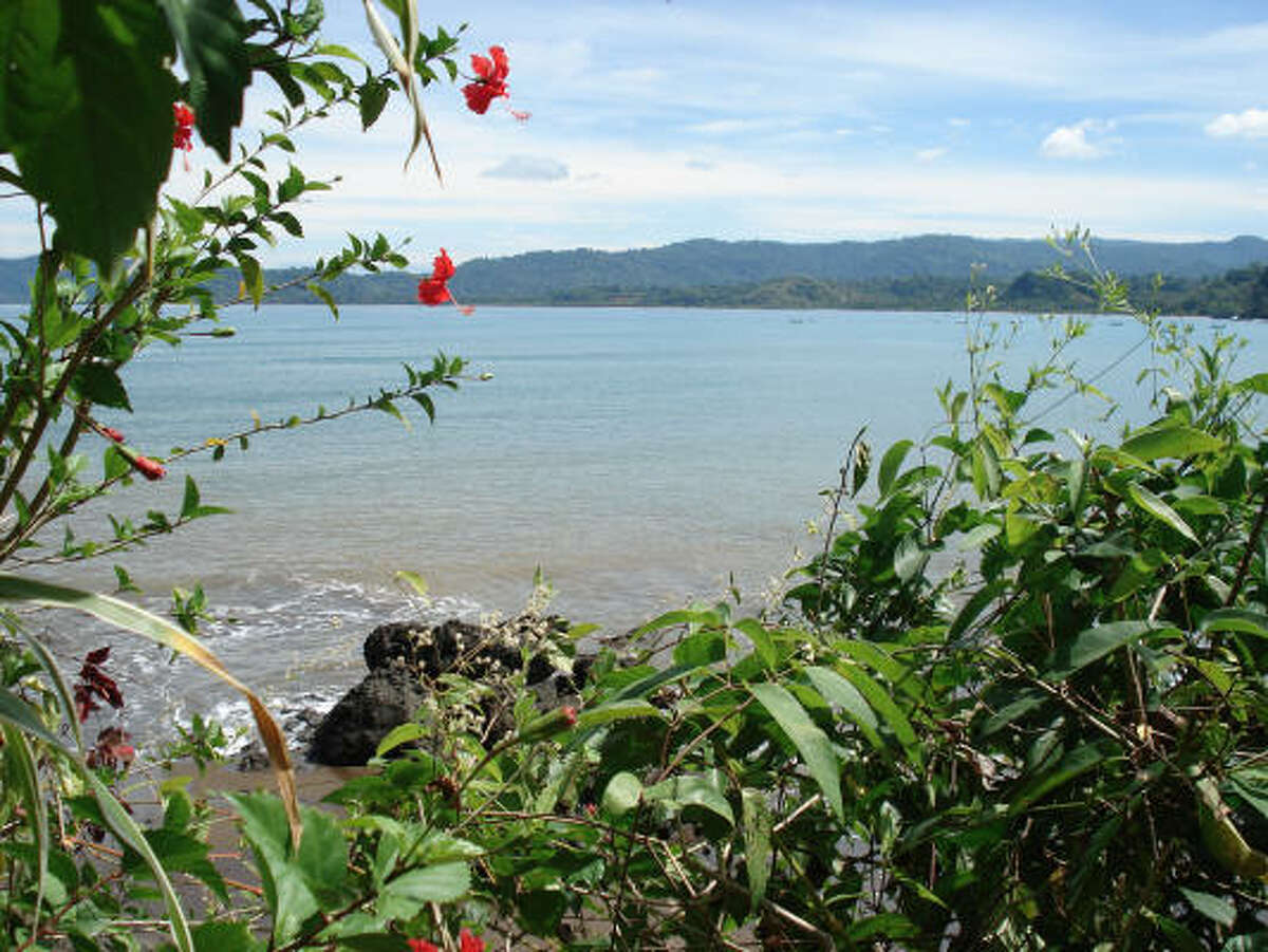 Hibiscus and Palm trees line the rainforest border of Drake Bay in Costa Rica.