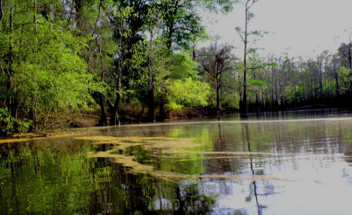 Kayaking in the Big Thicket National Preserve is an adventure.