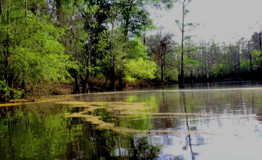Kayaking in the Big Thicket National Preserve is an adventure. Photo: TRACY L. BARNETT