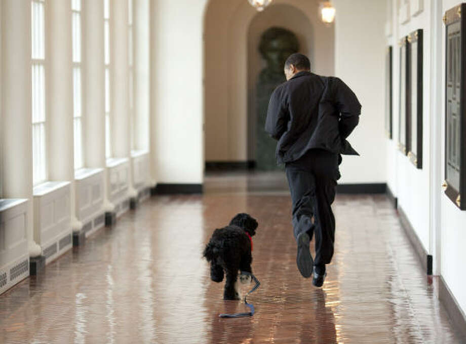 U.S. President Barack Obama runs through the White House with his family's new puppy, Bo, a Portuguese water dog. Photo: The White House, Getty Images