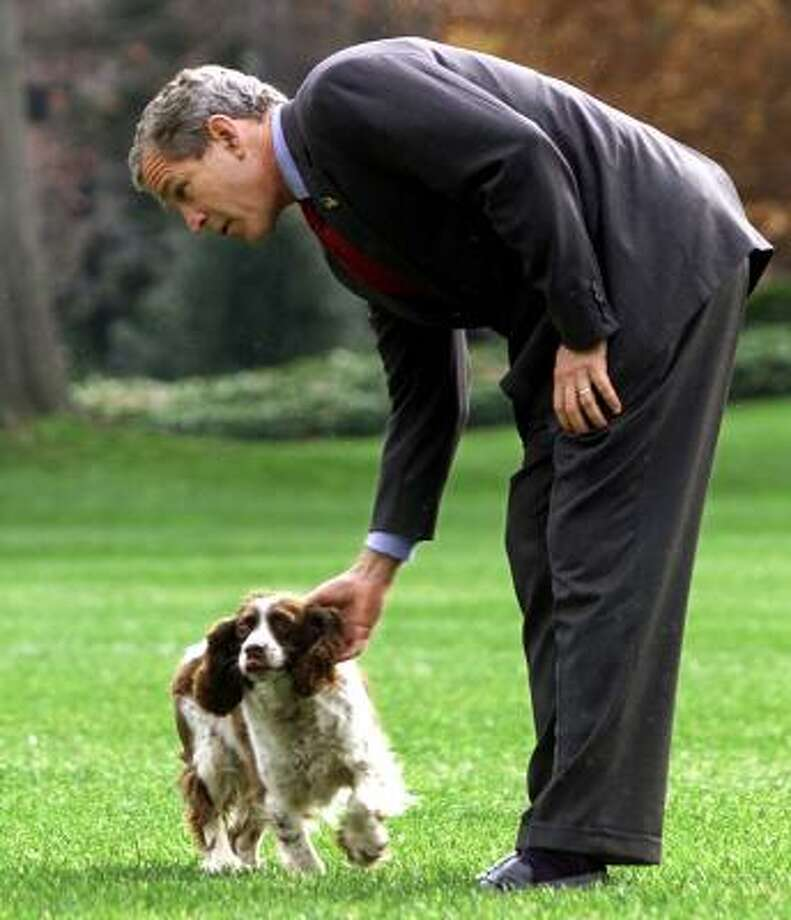 President Bush's English springer spaniel, Spot, was born in the White House during the administration of Bush's father. (Remember Millie's puppies?) Spot died in 2004 after nearly 15 years with the Bushes. Photo: DOUG MILLS, AP