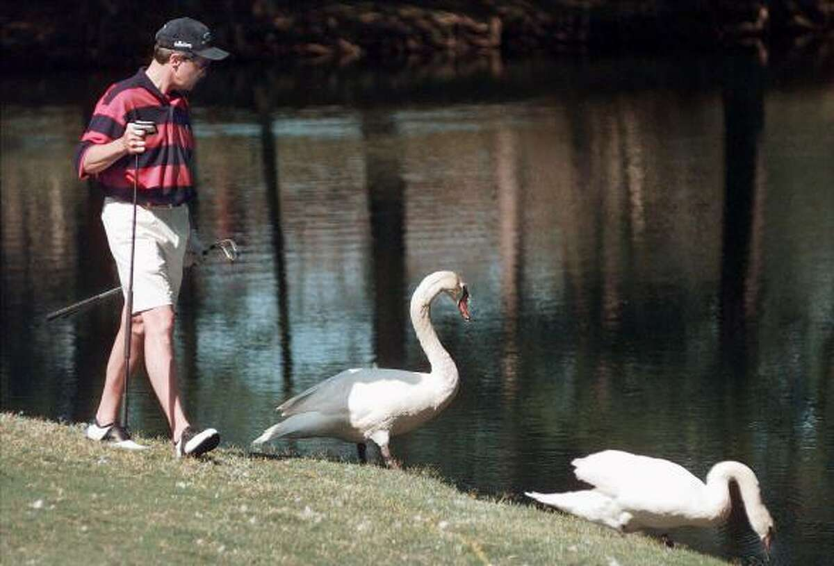 Ronnie White looks for his ball Thursday, May 6, 1999, along the shore of Crown Colony Country Club's 17th hole, considered one of the toughest holes in Texas as two geese ignore his presence during the first round of the Temple Cup Invitational amateur golf tournament in Lufkin, Texas. The tournament runs through Saturday. (AP Photo/The Lufkin Daily News, Joel Andrews) HOUCHRON CAPTION (05/07/1999): Ronnie White tries to duck the geese while looking for his ball at the Temple Cup in Lufkin.