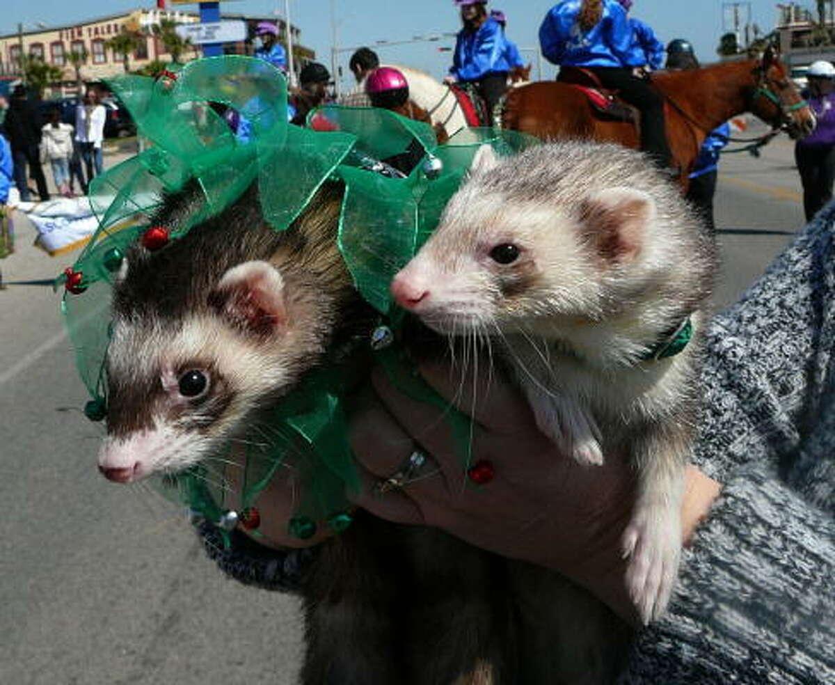 Fox and Slippy in Galveston for Mardi Gras