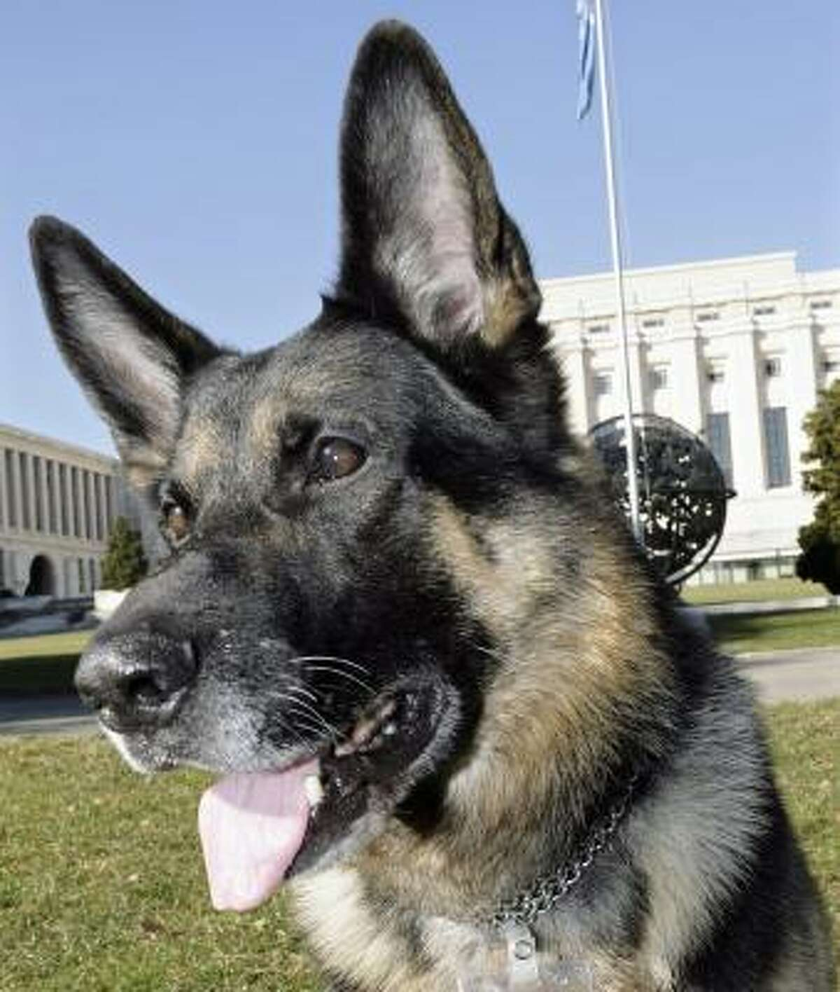 No. 3: German shepherd
