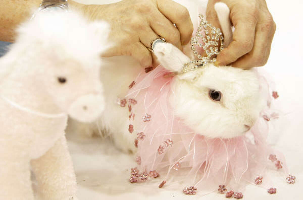 Fae Reece of Hockley puts the finishing touches on her costumed blue-eyed white Jersey Wooly rabbit at Reliant Center on Sunday. Her 'Drama Queen' won second place.