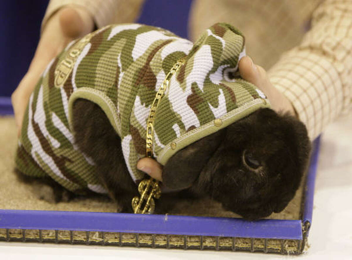 A Holland Lop rabbit named Tar and owned by Jennifer Herbers of Sugar Land dressed as 'Gangster Rabbit' for the contest Sunday. She won third place.