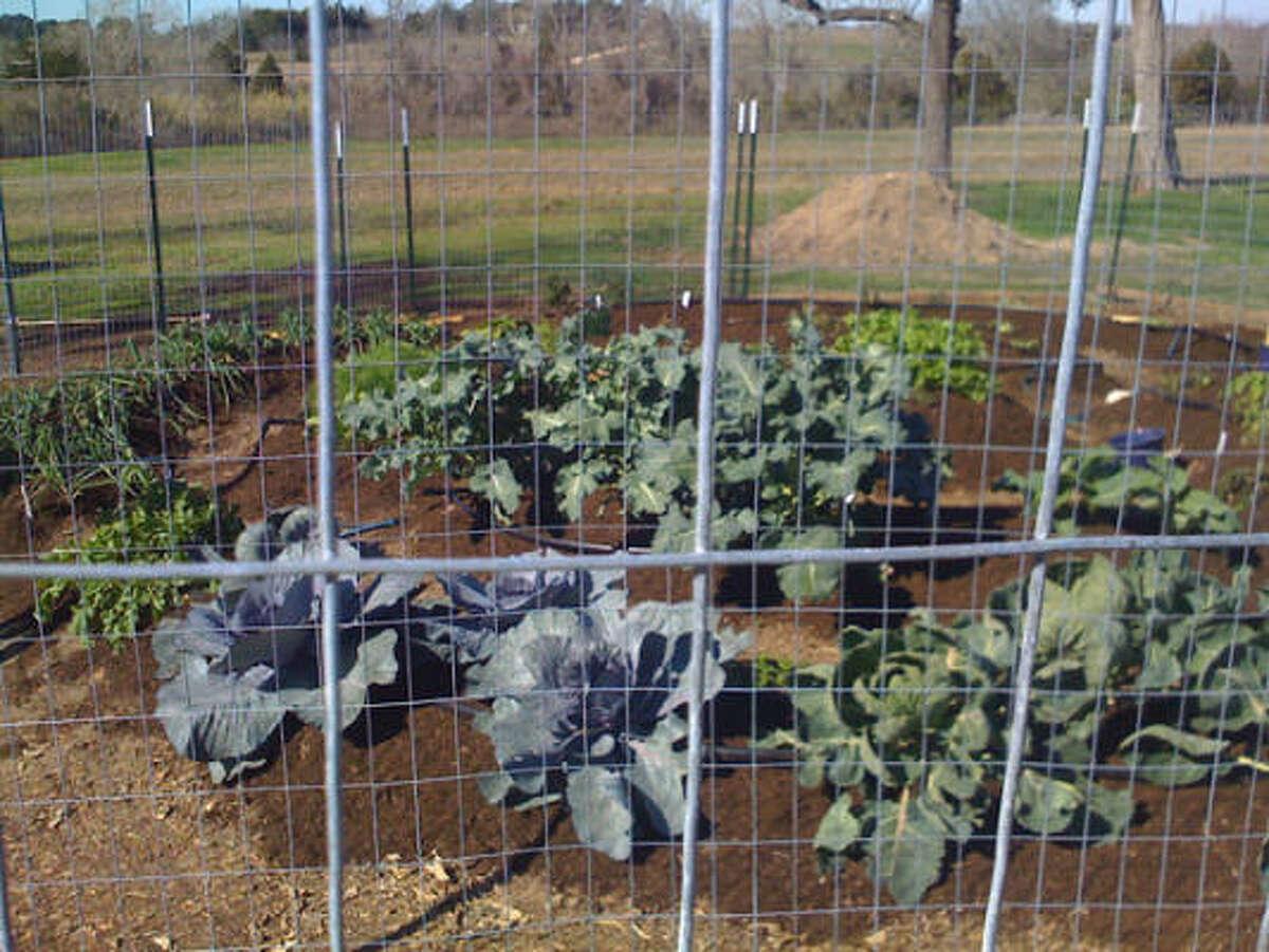 The Katzmans' vegetable garden in New Ulm. More: Story |Vegetable & herb garden inspirations | Search database vegetables | HoustonGrows.com