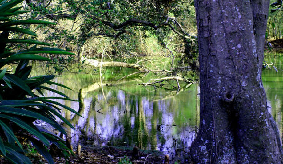 Scenes from the bayou could inspire a Monet. Photo: TRACY L. BARNETT, HOUSTON CHRONICLE