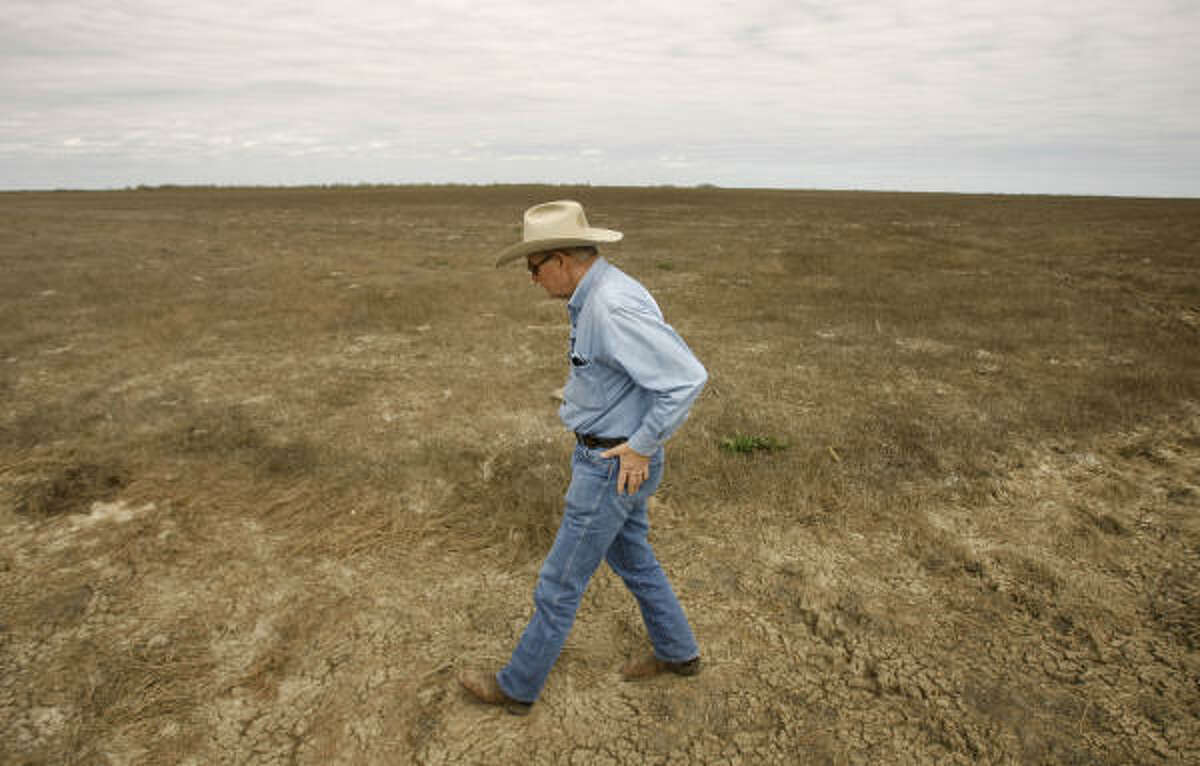 Bill White walks over his dry grassing field in Stowell. Most of the pasture, which should be feeding 2,500 head of cattle, is so dead that White's boots crunch when he walks across it.
