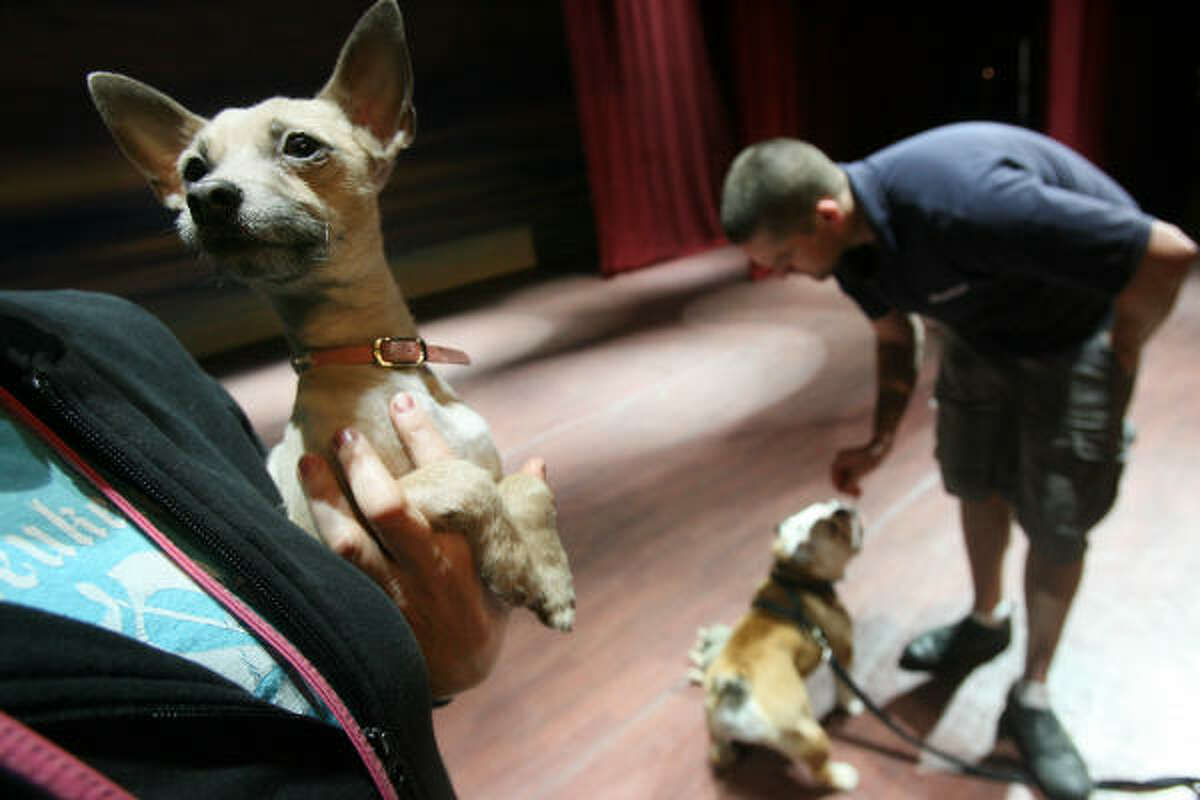 The handlers have Frankie and Nellie practice onstage for a performance.