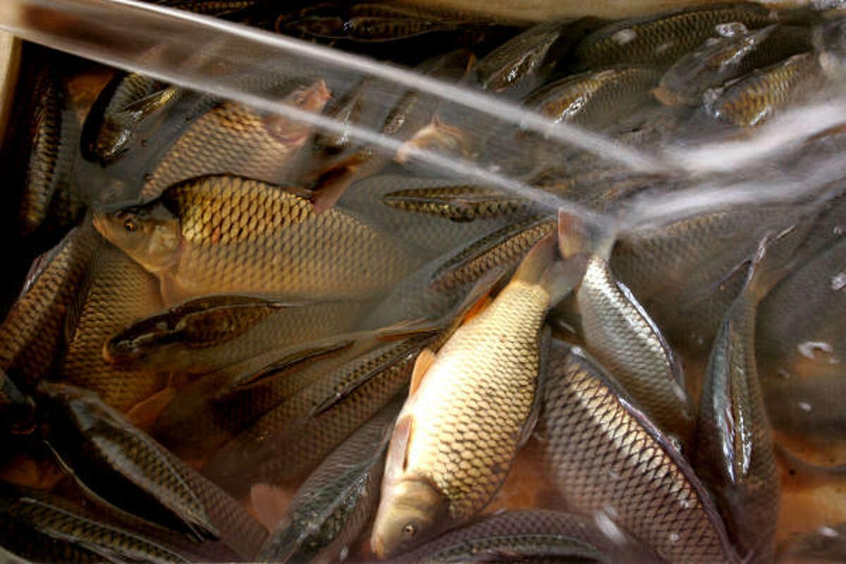 Fish are prepared at the newly opened Shuhada fish market.
