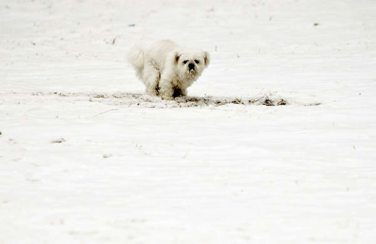 A dog inspects the snowfall in Beijing on Wednesday.