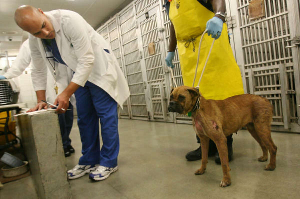 DeWayne Compton, left, and Billy Greggs process stray dogs Feb. 13 at BARC in Houston.