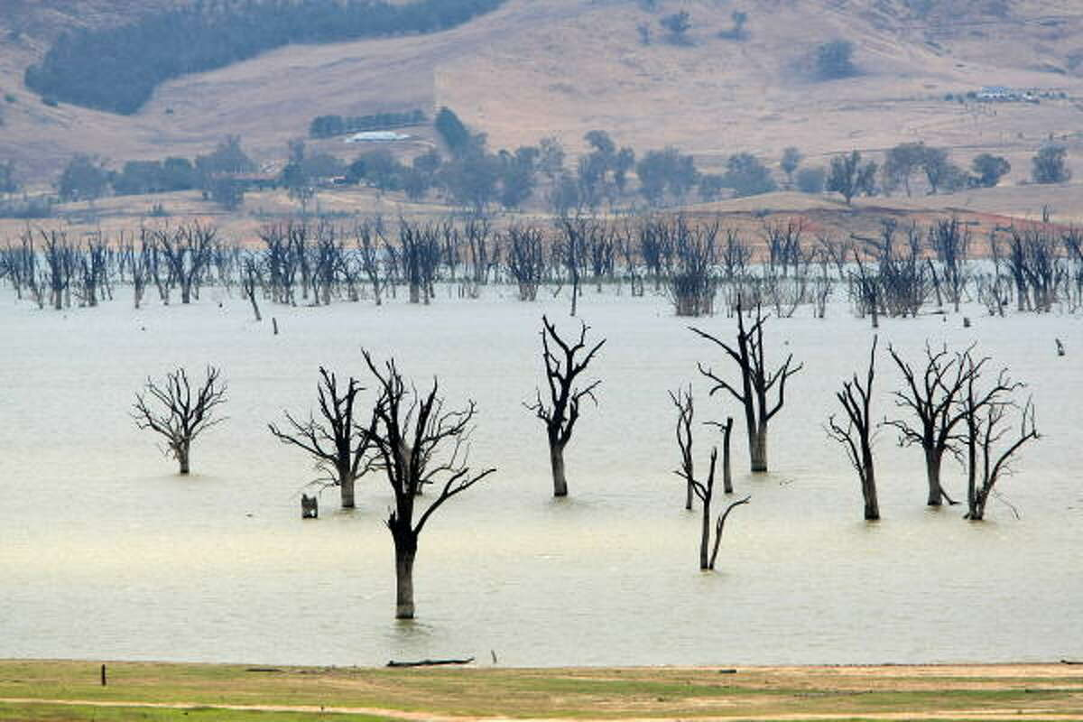 Lake Hume, straddling the Victorian/New South Wales border, exposes once submerged trees after the dramatic drop in water level caused by a decade of drought caused the reservoir to fall below one third capacity on February 12, 2009. At 100 percent capacity Lake Hume stretches for 40 kms up the Murray and Mitta River valleys and can hold 3,000,000 megalitres of water -- approximately five times the volume of Sydney Harbour. AFP PHOTO/Torsten BLACKWOOD