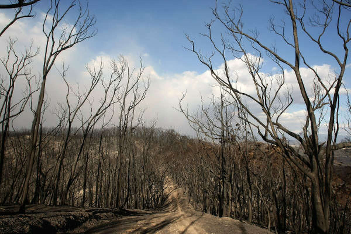 The remains of a fire damaged bush overlooking the Steels Creek region Thursday in Steels Creek, Australia. Victoria Police have revised the bushfire disaster death toll to 181, the worst in Australia's history.
