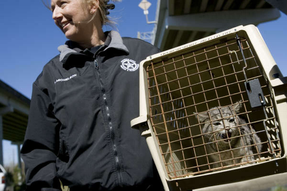 Deborah Michielson of the SPCA holds a cat that was rescued from a piling beneath the Beltway 8/IH-10 interchange Wednesday in Houston.