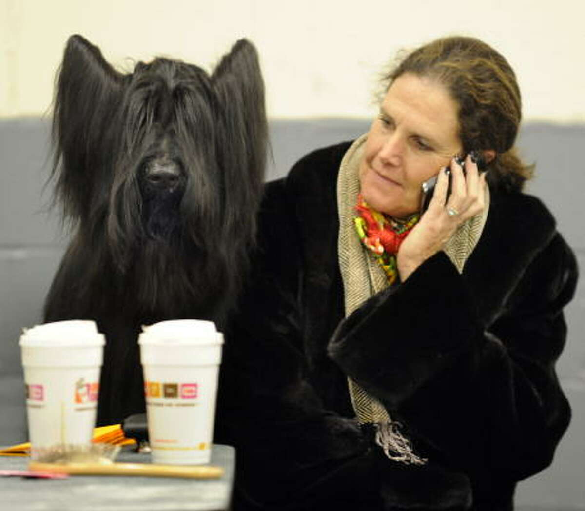 A dog waits backstage in the grooming area.