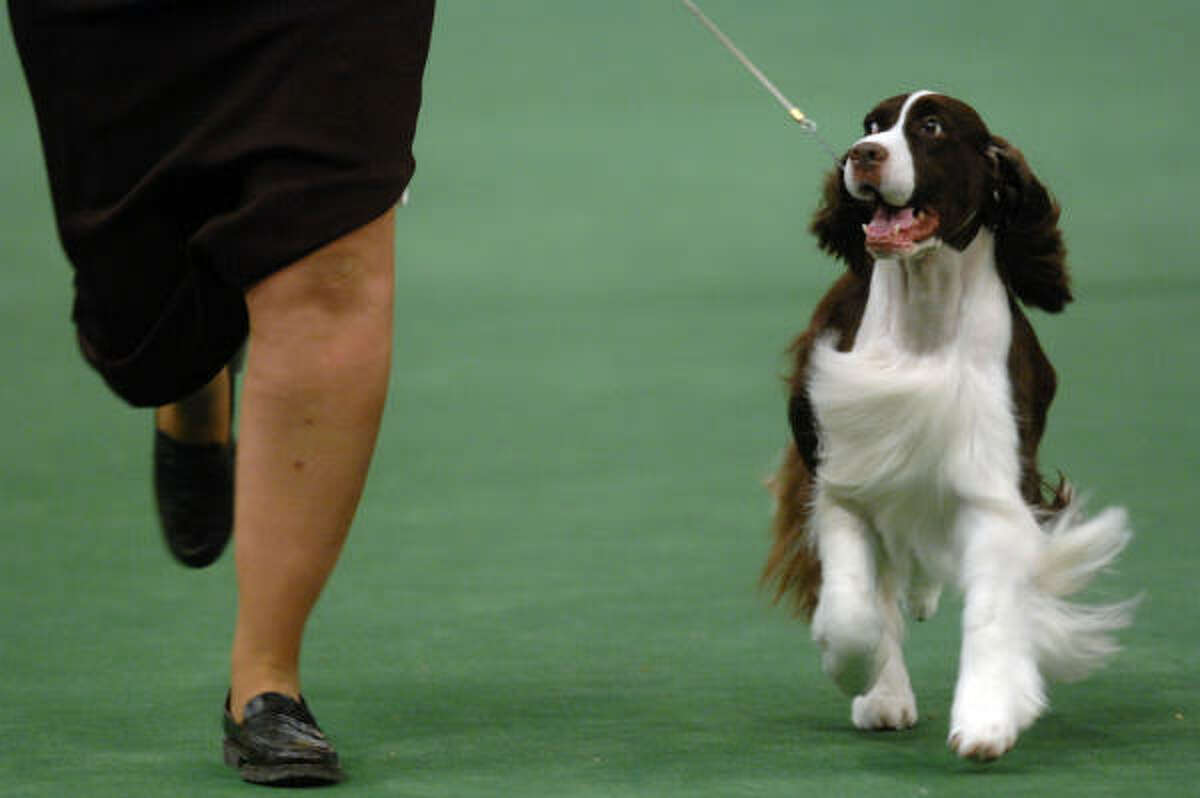 Felicity's Diamond Jim, an English springer spaniel known as James, won at Westminster in 2007.
