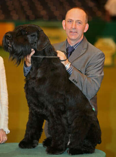 Phillipe, a giant schnauzer also know as Jafrak Phillipe Oilivier, poses with his owner Kevin Cullen