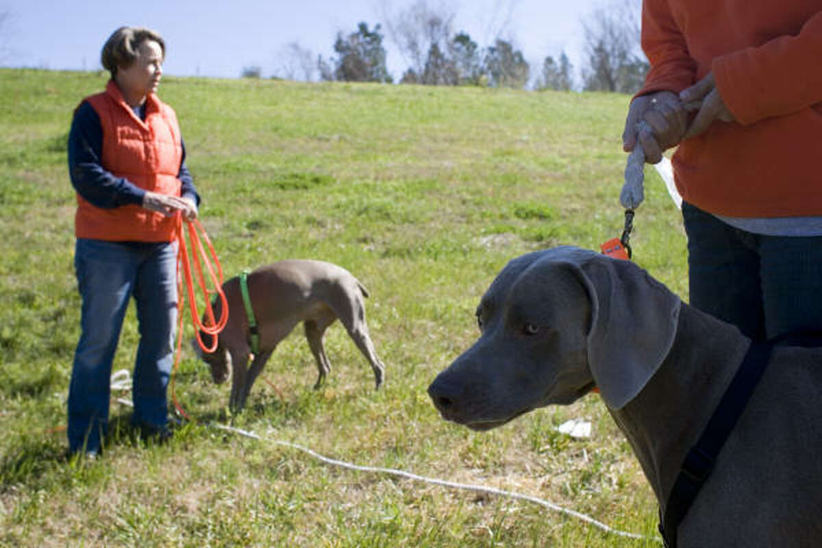 Kay Walker, left, and her daughter Kristi Whitworth enlisted their weimaraners, Gunner and Remy, in the search for Dazzle. The dogs scent for birds on a competitive level, but have never been trained to search for another dog.