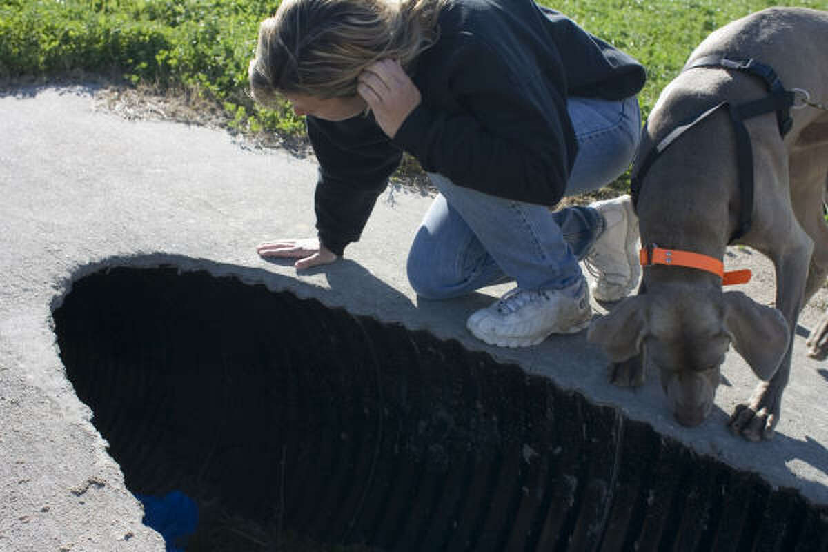 Gerry Thornton and one of Kay Walker's weimaraners search for Dazzle in a culvert near Sims Bayou in Houston. The dogs confirmed that Dazzle had been in the culvert.
