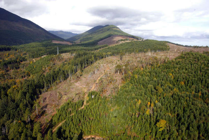 But a Hearst investigation found Scouting councils have pursued dozens of high-impact, commercial timber harvests – some of them in or near forests with sensitive resources or habitat for protected plant and animal species.