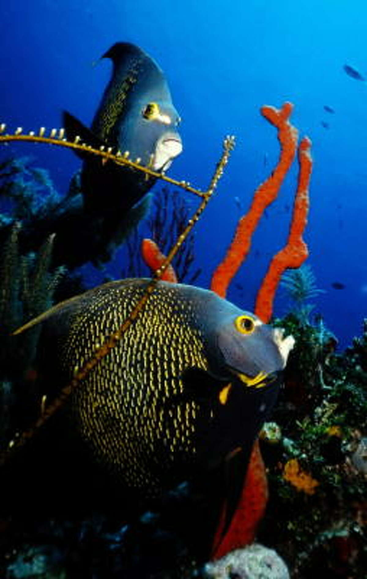 Colorful fish and reef inhabit the waters.
