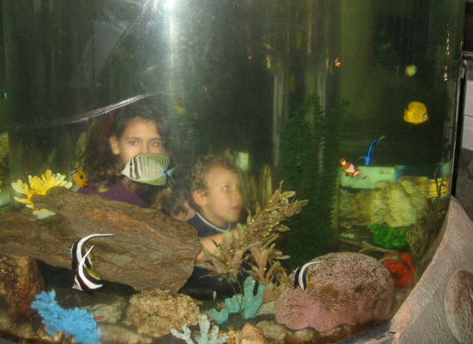 Wandering through the World Aquarium, it sometimes feels almost as though you're inside looking out. Photo: Tracy Barnett, Chronicle