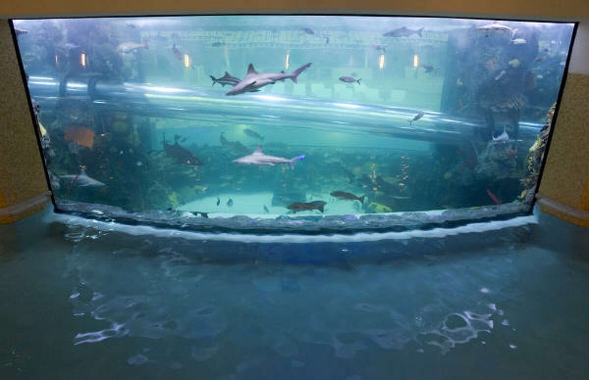 A large shark-filled saltwater aquarium stands in the center of the newly renovated pool, The Tank, at the Golden Nugget.