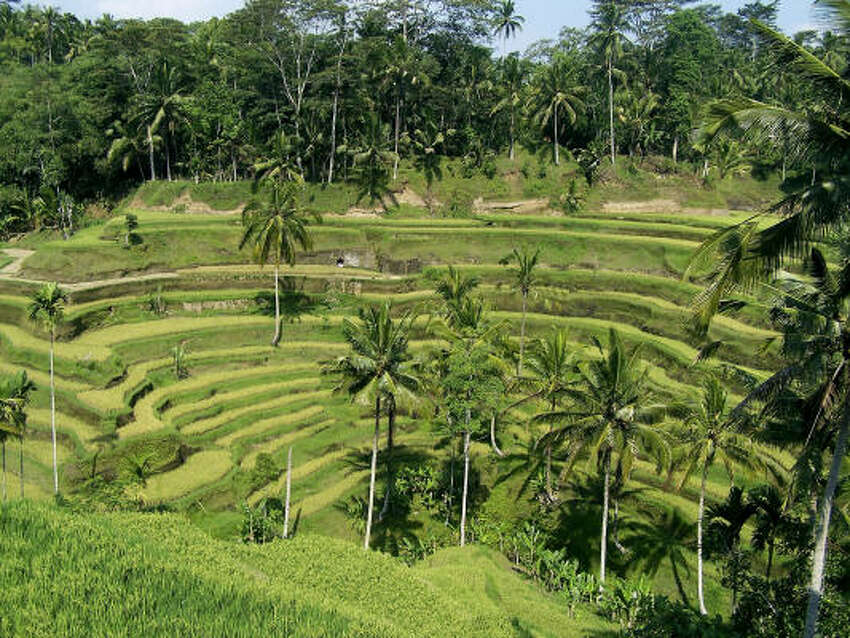 Terraced rice paddies are a common sight in Bali.