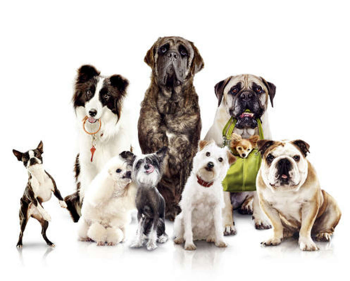 The 70 dogs sharing the screen with humans in Hotel for Dogs were chosen for their quirkiness and looks. Who stands out? Click on.