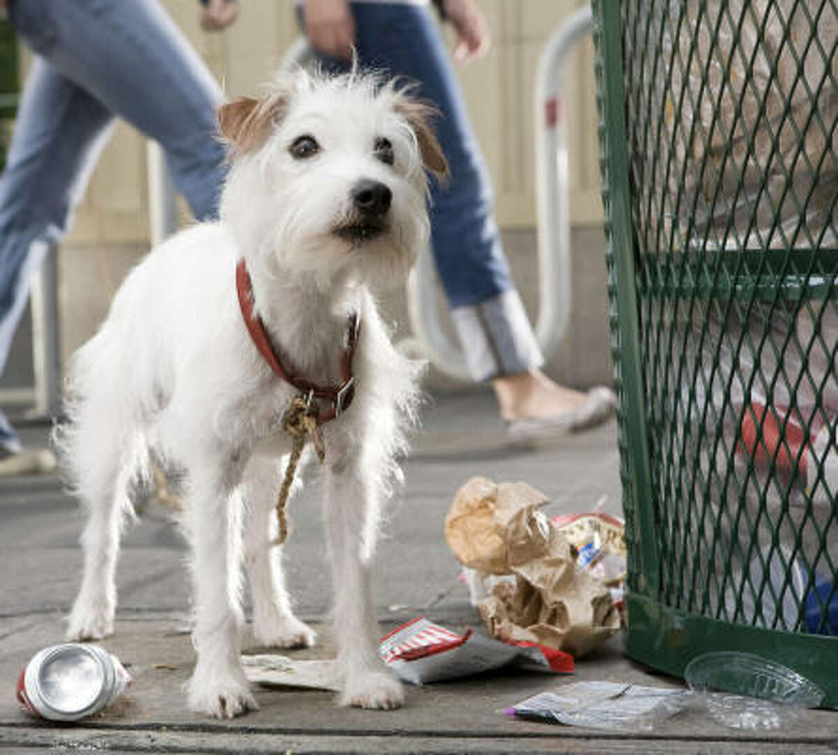 Friday: The star is a shelter dog rescued six months before shooting and named Cosmo. He is executive producer Ivan Reitman's favorite. There were two doubles for Cosmo, also rescues.