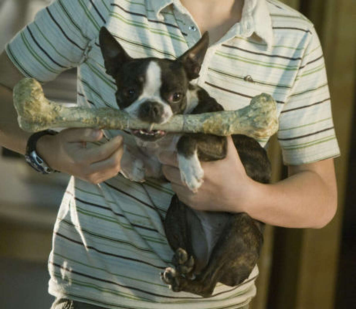 Georgia: The sweet-faced Boston terrier was one of the kids' favorites because she's small and will fetch anything.