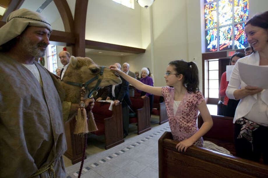 Bronwyn Wismer, 12, reaches out to pet Rosebud, a camel from Texan Petting Zoo in Rosebud, as he is led by Mike Smilie through St. Francis Episcopal Church during Epiphany service on Sunday. Photo: Johnny Hanson, Chronicle