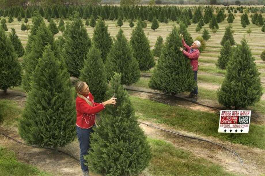 Lou and Fran Defazio, owners of Jingle Bell Ranch near Tomball, look over their trees in 2005. Photo: Carlos Antonio Rios, Chronicle