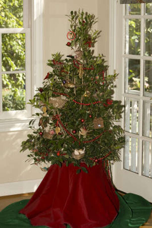 Each holiday season, we decorate our homes with gifts from our gardens. We snip greenery, berries and cones for wreaths, garlands and to tuck into our centerpiece, the Christmas tree. Photo: James Nielsen, Chronicle