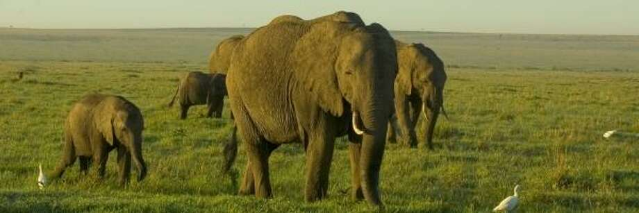 Visitors to Kenya will see wildlife like a herd of elephants. Photo: Handout, KENYA TOURIST BOARD