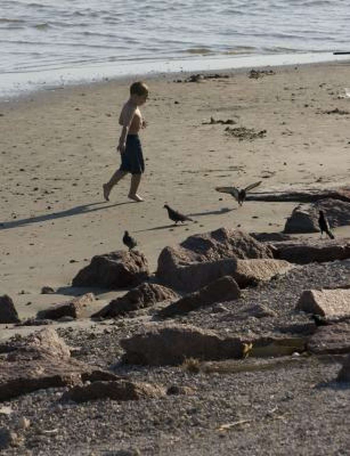 Ethan Green, 5, chases birds on the beach along the Seawall on Monday.