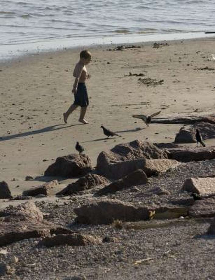 Ethan Green, 5, chases birds on the beach along the Seawall on Monday. Photo: STEVE CAMPBELL, CHRONICLE