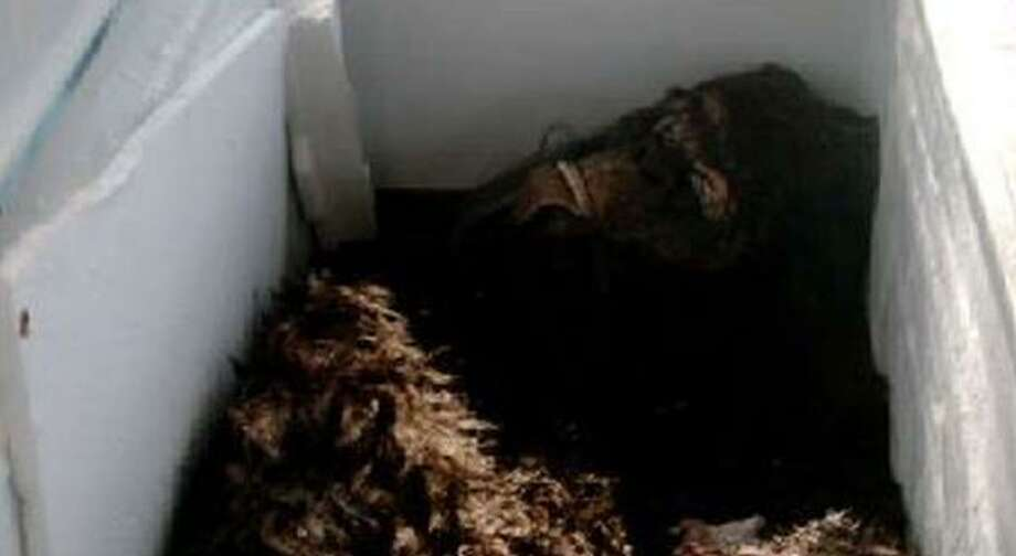 "Two Bigfoot hunters, Matthew Whitton and Rick Dyer, said they have the carcass of the Bigfoot creature in a freezer on the TV show ""Finding Bigfoot."" Photo: BIGFOOT GLOBAL, NEW YORK TIMES"