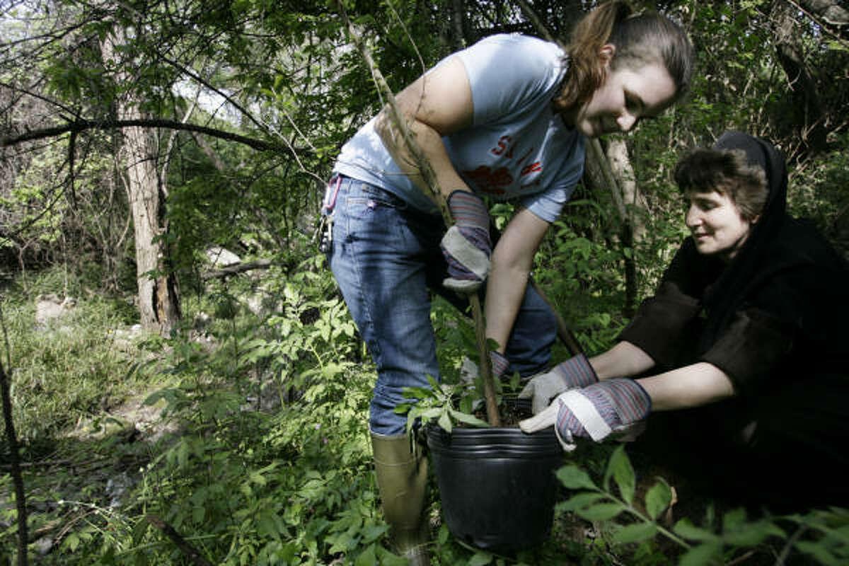 Elizabeth Rinaldi and Sister Damien Marie, both of University of St. Thomas, plant native trees around Japhet Creek.